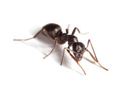 KPC_ContentThumb-Ants