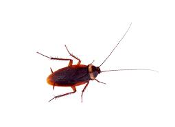 KPC_ContentThumb-Cockroach